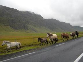 Iceland 730