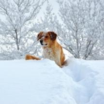 Marta e la neve